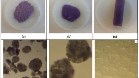 São seis microimagens de microscópio. As três primeiras mostram substâncias de cor escura que estão dentro de uma lâmina redonda e transparente. As outras três imagens que estão abaixo das primeiras trazem partículas escuras e transparentes que são as microcápsulas de gel de alginato.