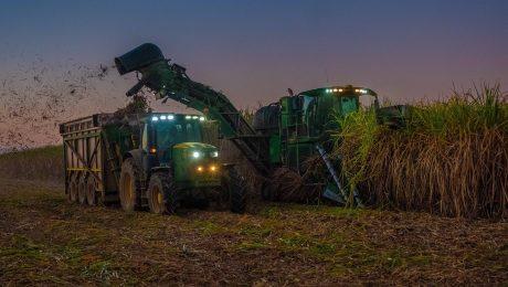 Em ambiente de plantação, cana de açúcar é cortada por máquina colhedora e lançada em caminhão de transporte.