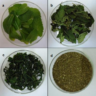 Hortelã em diferentes estágios, sendo: a- fresca; b- seca com a nova tecnologia; c- seca branqueada, d- seca adquirida no mercado local.